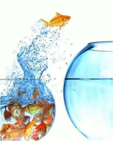 blue ocean vs red ocean strategy pdf